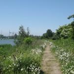 Schellingwouderpark, un paseo por la naturaleza