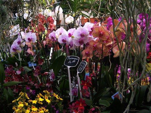 Bloemenmarkt o Mercado de las Flores