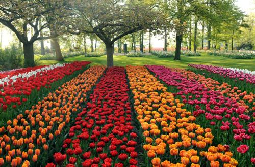 Keukenhof, jardín de fama mundial
