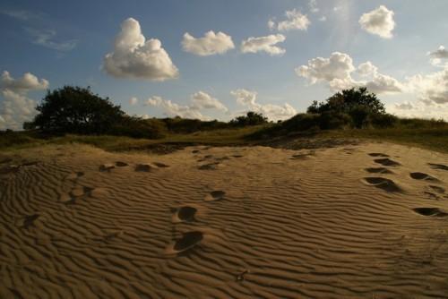Waterleidingduinen, las dunas filtrantes de Ámsterdam